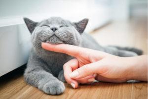 Obowiązki właścicieli lecznic dla zwierząt w zakresie odpadów weterynaryjnych